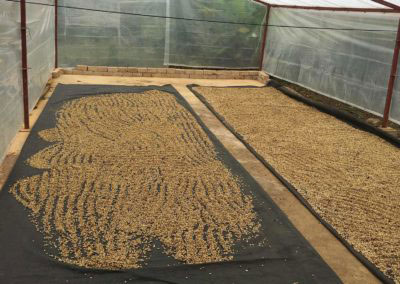 Drying in Peru: the Final Step in Quality Improvement