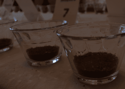 Coffee in Galapagos: Evolving To Thrive