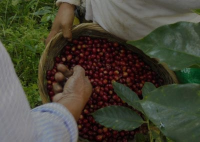 Why and How to Estimate Costs of Production in a Coffee Farm?