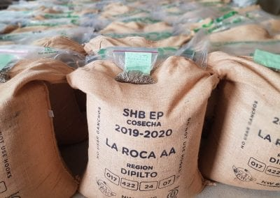 Grade Expectations: Finding Versatility and Value in A and AA Coffees